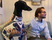 شبهوه بالزرافة.. كلب برقبة طولها 25 سم يثير حيرة الناس فى هولندا.. صور