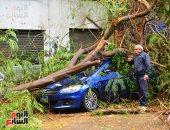 سقوط شجرة بأحد شوارع المهندسين بسبب سوء الأحوال الجوية وشدة الأمطار (صور)