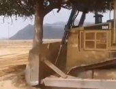 """""""البيئة"""" السعودية تتوعد شركة أزالت شجرة معمرة في جازان بعقوبات صارمة.. فيديو"""