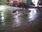 """تداول فيديو لشاب ينقذ """"كلب"""" قبل موته صعقا بالكهرباء بسبب الأمطار"""