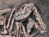 هل كان يحرسه؟.. اكتشاف بقايا كلب مدفون مع صاحبه منذ 8400 عام