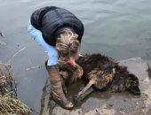 لم تفكر فى سلامتها .. بريطانية تقفز بنهر متجمد لإنقاذ كلب .. فيديو وصور