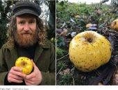 العثور على نوع غريب وجديد من التفاح في بريطانيا