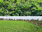 الزراعة: تحديث منظومة الرى تعمل على ترشيد المياه وتقليل فواقد النقل