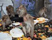 مهرجان مأدبة القرود.. عيد سنوى لجلب الحظ فى تايلاند.. ألبوم صور