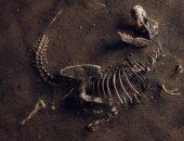 ابن عمه.. اكتشاف بقايا الأب الروحى لديناصور تى ركس المتوحش عمره 230 مليون سنة