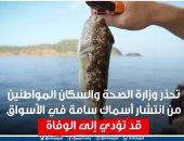 الصحة تحذر من انتشار أسماك سامة فى الأسواق تسبب الوفاة