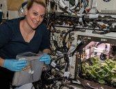 رواد الفضاء ينجحون فى زراعة الفجل خارج الأرض.. اعرف سبب التجربة والهدف منها