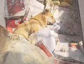 وفاء نادر.. كلب يرفض الطعام وينتظر عودة صاحبه المتوفى بالصين.. فيديو وصور