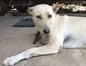 تعرف على القصة الكاملة لتسميم كلبة ودفن جرائها أحياء فى مدينة نصر