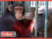 إنجي والبرنس.. اعرف حكاية أشهر قصة حب في حديقة الحيوان