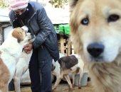 الرفق بالحيوان جمال.. والدة ملكة جمال سورية تنقذ 3500 كلب ضال.. ألبوم صور