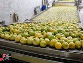 ارتفاع صادرات مصر الزراعية لأكثر من 4 ملايين طن خلال الـ6 أشهر الماضية