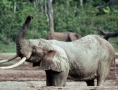 حطام سفينة تجارية محملة بالعاج تعود للقرن الـ16 يكشف حقائق علمية عن الأفيال