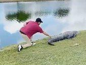 مشهد يحبس الأنفاس.. لاعب جولف يلتقط كرة من جانب تمساح فى فلوريدا.. فيديو