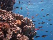 شاهد جمال مواقع الغطس فى البحر الأحمر.. 25 صورة تكشف سحر الطبيعة