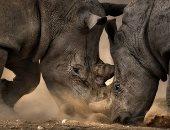 الصين تضيف أكثر من 500 نوع إلى قائمة حماية الحياة البرية
