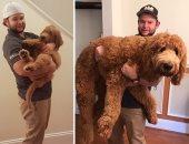 """""""كلب ده ولا أسد"""".. عندما يصبح حيوانك الأليف أطول منك.. ألبوم صور"""