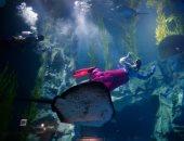 اللعب تحت الماء..كوريا الجنوبية تحتفل بالعام الجديد من أعماق البحار..ألبوم صور