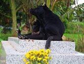 معنى الوفاء.. كلب يمكث على قبر صاحبه لمدة 3 سنوات فى فيتنام.. صور