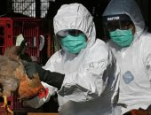 """5 ولايات هندية تكتشف عشرات البؤر لتفشي """"إنفلونزا الطيور"""""""