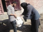 محافظ كفر الشيخ: تحصين 47030 طائراً ضد الأمراض الوبائية