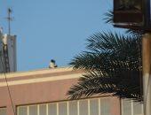 أب يحمل ابنه المريض أعلى مبنى مستشفى جامعة طنطا لمشاهدة مباراة.. صور