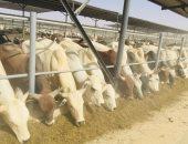 الزراعة تعلن فحص 17 ألف رأس ماشية ضمن نشاط القوافل العلاجية المجانية