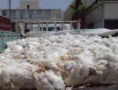 ضبط 3 أطنان من الدجاج النافق قبل توزيعها على أصحاب المحلات فى بور سعيد