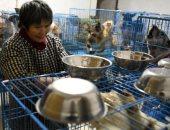 صينية تحول منزلها إلى ملجأ يضم 1300 كلب و100 قط و4 خيول.. صور