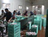 ضبط لحوم منتهية الصلاحية ومخالفات فى 3 مصانع بالمنطقة الصناعية بالإسكندرية