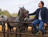 حكيم يكشف عن حبه للخيول × 3 صور.. ويعلن عن عزومة لـ10 من متابعيه