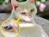علامات تحذرك بضرورة أخذ حيوانك الأليف إلى الطبيب.. العيون الدامعة أبرزها
