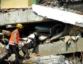 كلاب فى مهمة رسمية.. رحلة البحث عن المفقودين فى زلزال إندونيسيا