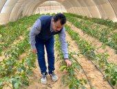 رئيس جامعة الوادى الجديد يتفقد مزارع القمح والصوب الزراعية بمقر الجامعة بالخارجة
