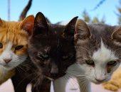 جزيرة مهجورة.. 800 قط بلا مأوى في قبرص بعد تخلي البشر عنهم.. ألبوم صور