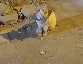 """من القاهرة للمنيا.. رحلة سمر لإنقاذ """"قط"""" علقت برقبته قطعة حديدية.. فيديو"""