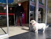 """صور.. """"مثال فى الإخلاص"""" كلبة تنتظر صاحبها المريض أمام المستشفى 6 أيام حتى خروجه"""