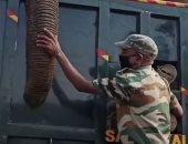 """حارس محمية ينهار بعد نفوق فيل اعتاد على رعايته.. """"فيديو وصور"""""""