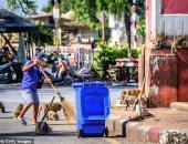 انخفاض أعداد السائحين السبب.. عصابة من 100 قرد تسرق الطعام بمزرعة فى تايلاند