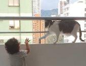 قط يمنع طفل صغير من تسلق سور شرفة منزله.. اعرف القصة