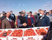 وزيرا الزراعة والرى يتفقدان مزرعة الطماطم بغرب المنيا.. صور