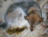 كلب ضال يتجمد من برودة الجو فى 54 درجة تحت الصفر بسيبيريا.. فيديو وصور