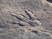 طفلة بريطانية تعثر على بصمة ديناصور عمرها 220 مليون عام بالصدفة.. صور