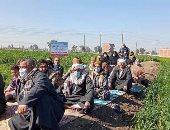 زراعة الشرقية تُنفذ مدرستين حقليتين عن زراعة محصولى القمح والفول