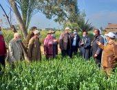 الزراعة تتابع الحالة العامة للحقول الإرشادية للقمح بالبحيرة.. التفاصيل
