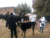 """10 توصيات من """"الزراعة"""" لحماية الماشية من مرض الحمى القلاعية.. تعرف عليها"""