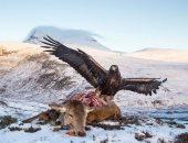 الفريسة السهلة فى الغابات الوعرة.. لقطات مذهلة للقنص البرى فى اسكتلندا..ألبوم صور