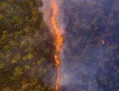 صورة خط نارى يتوسط غابات أستراليا تفوز كأحسن صورة للحياة البرية فى 2020