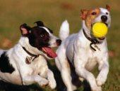 دراسة جديدة تكشف سبب لعب الكلاب أمام أصحابها.. والنتيجة غير متوقعة